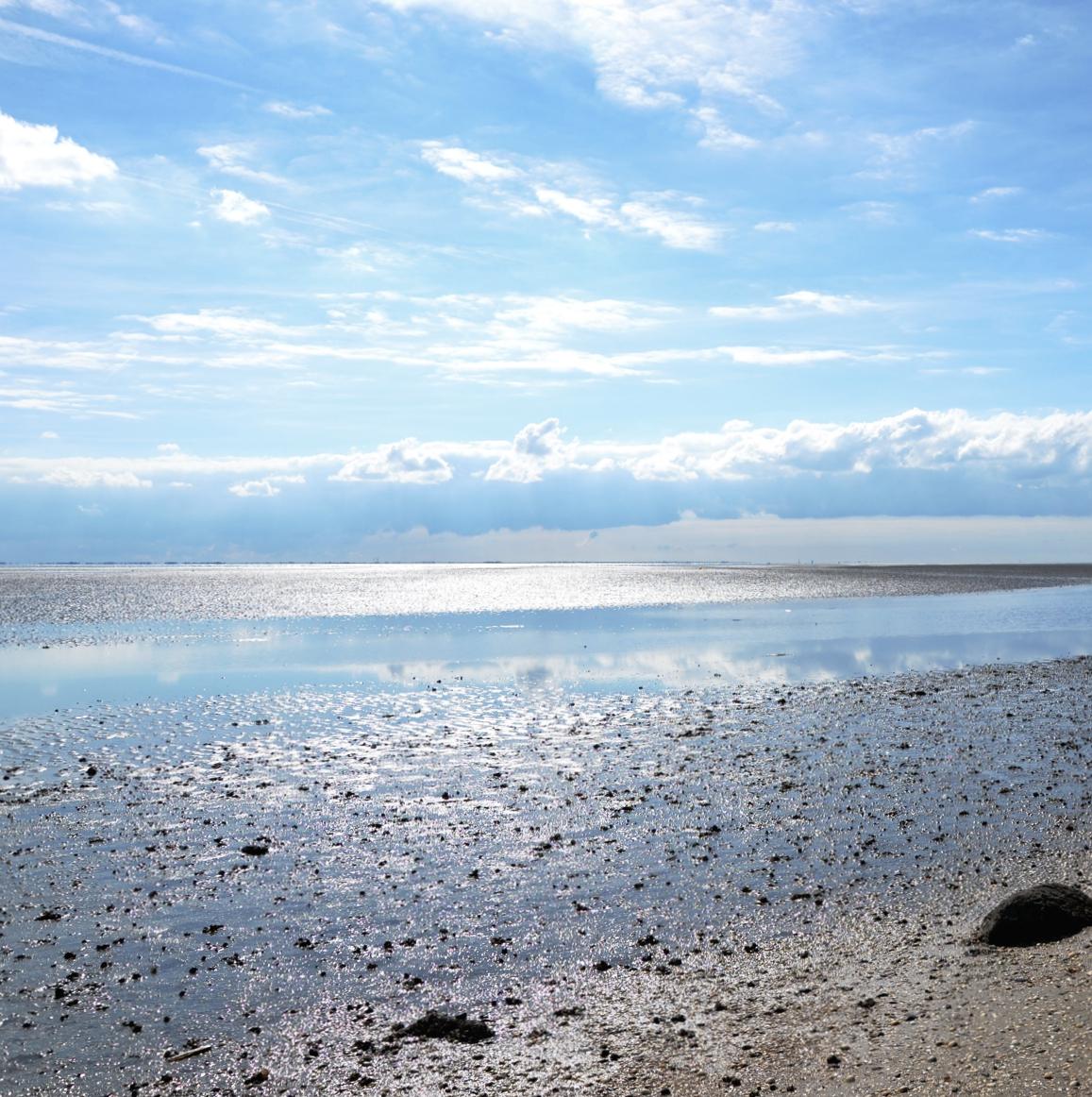 Nordsee Urlaub für Anfänger Küstenglück Meeresgrund