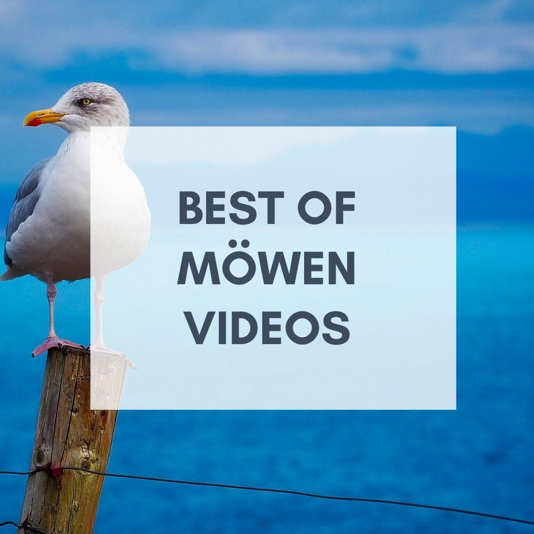 Möwen Videos lustig
